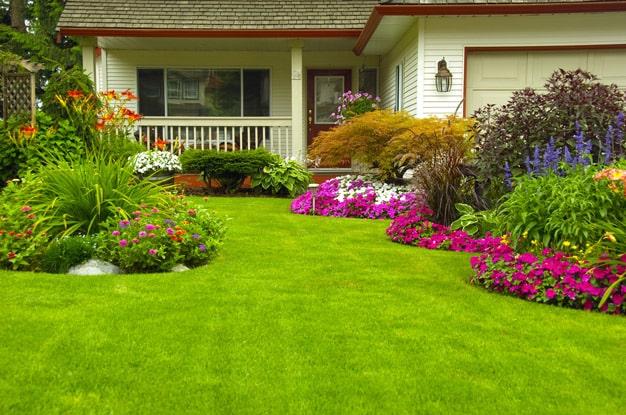 Красивый и ухоженный газон